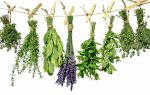 Травы от мочекаменной болезни у человека