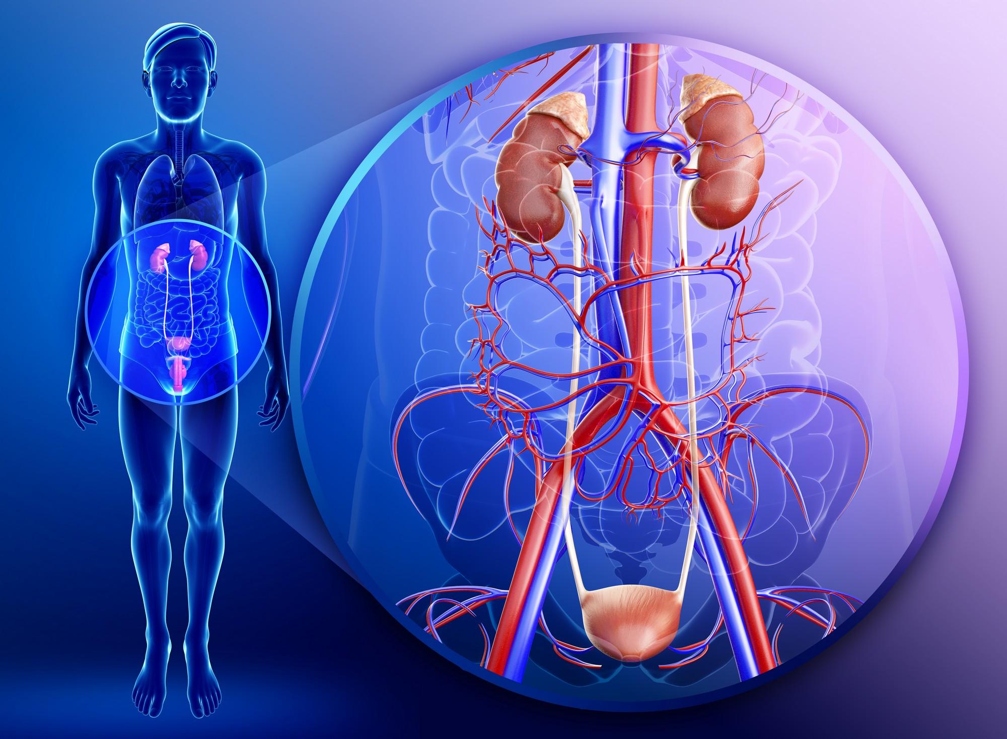 Антибиотики при воспалении мочеполовой системы у мужчин